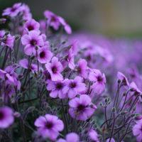Красивые цитаты про цветы (50 цитат)
