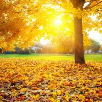 Красивые цитаты про осень (250 цитат)