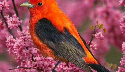 Цитаты про птиц (200 цитат)