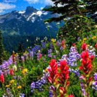 Цитаты о природе и экологии (300 цитат)
