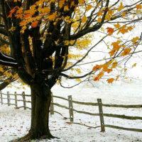Красивые цитаты про ноябрь со смыслом(200 цитат)