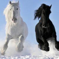 Самые красивые цитаты про лошадей со смыслом (300 цитат)