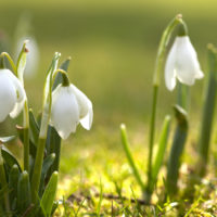 Красивые цитаты про весну(300 цитат)