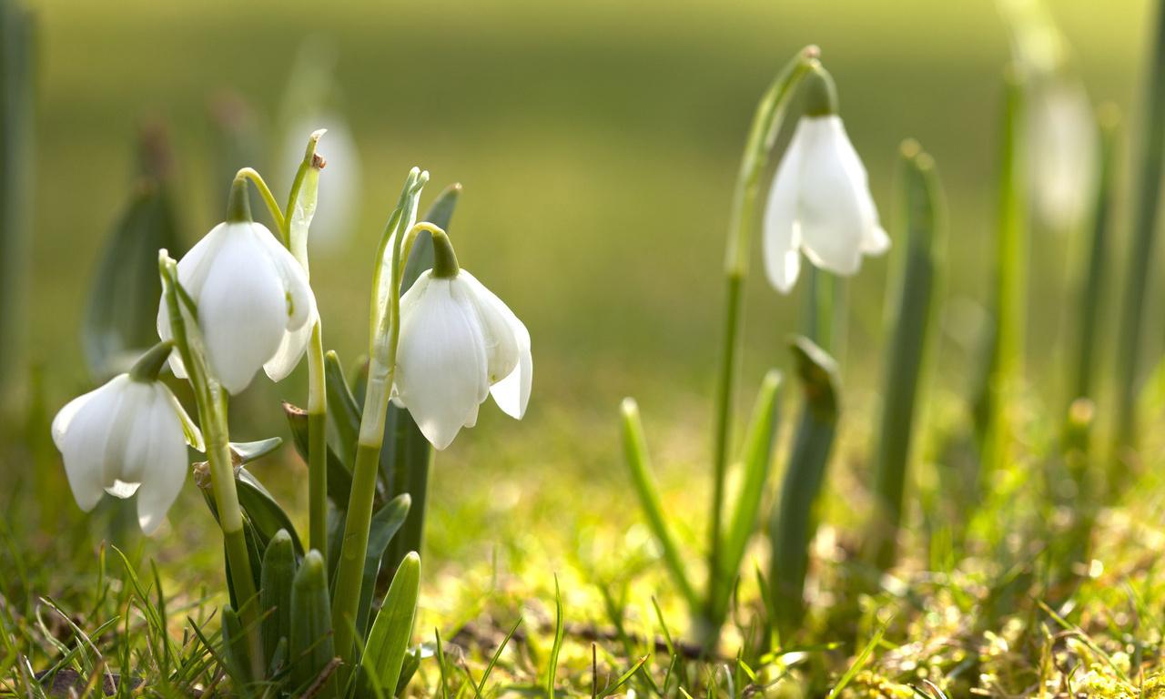 Картинки красивые к весне, анекдоты