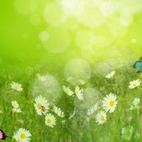 Красивые цитаты про лето(300 цитат)