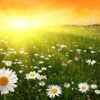 Красивые цитаты про лето (300 цитат)
