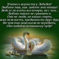 Красивые цитаты о лебедях(30 цитат)