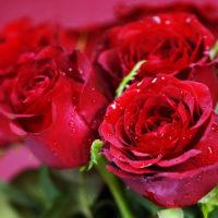 Красивые цитаты о розах(130 цитат)