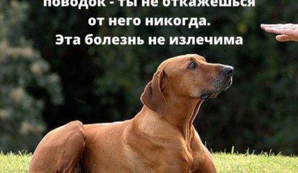 Мудрые цитаты про собак(350 цитат)