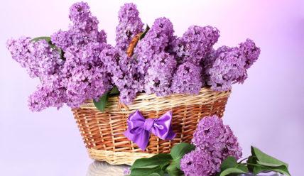Красивые фразы про цветы(250 фраз)