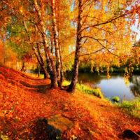 Красивые выражения про осень(300 выражений)