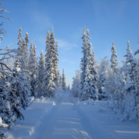 Красивые выражения про зиму (560  выражений)