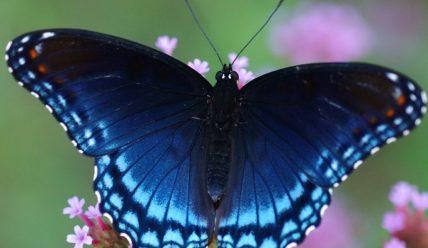 Красивые цитаты про бабочек(50 цитат)